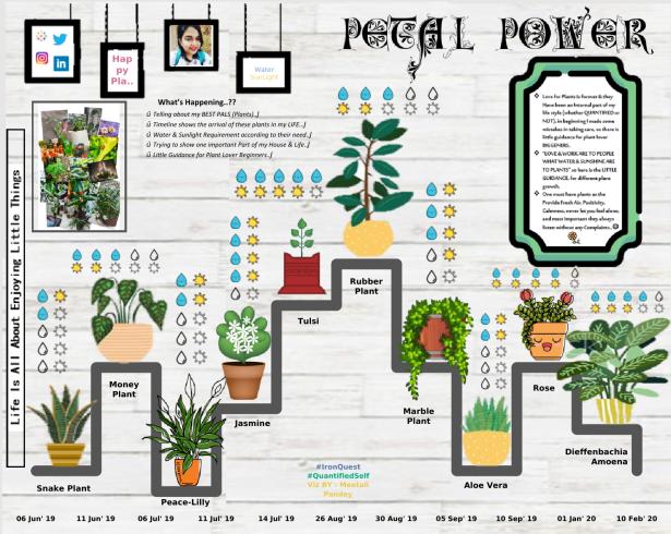 Meetali - Petal Power